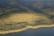 The timbered shores of Admiralty Island as seen from the air.