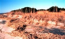 ACE Basin National Estuarine Research Reserve.  Sand dunes on Otter Island.
