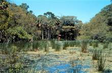 ACE Basin National Estuarine Research Reserve.  Interior wetlands on Ace Basinisland.