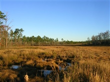 Facing south in Hawks' Marsh, a freshwater marsh within the Grand Bay NERRboundary.