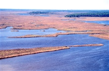 Grand Bay National Estuarine Research Reserve.Northwest showing maritime pine islands along Crooked Bayou. LSU aerial shoreline survey of October 1998.