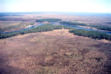 Grand Bay National Estuarine Research Reserve.East showing Bayou Cumbest from northwestern portion of NERR. LSU aerial shoreline survey of October 1998.