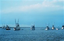 Shrimp boats protesting turtle-excluding device regulations on the CalcasieuRiver.