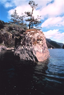 Stunted trees and bushes growing from offshore rock reminiscent of bonsai garden