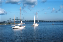 Sail boats with Newport Bridge in the background