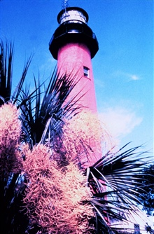 Lighthouse and palmetto