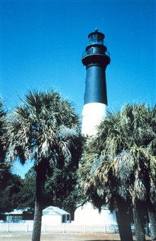 Hunting Island Lighthouse and palmetto trees