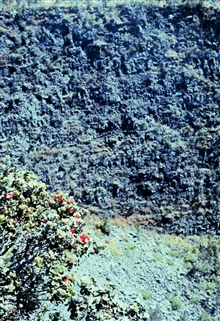 Volcanic cliff with red flowers in foreground.