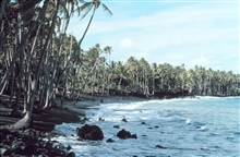 A black lava sand beach - since destroyed by lava flows.