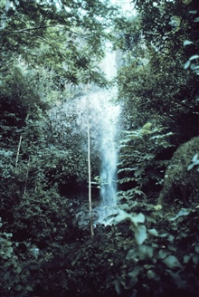 Waterfall on Kauai seen through the rain forest