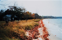 A fall high tide along a Patuxent River beach