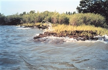 Like most areas in Chesapeake Bay, Wye Island suffers from the scourge oferosion as waves beat against the shoreline.