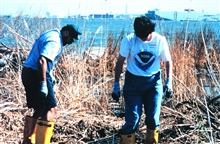 Volunteers helping clean up the wetlands and waterfront area around Fort McHenry in Baltimore Harbor.