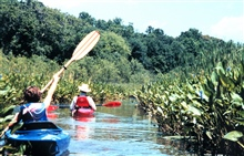 National Oceanographic Data Center employees up a creek -  kayaking along thePatuxent River.