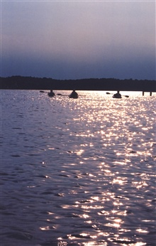 Late afternoon sun-glint on the lower Patuxent River silhouetting a group ofkayakers.