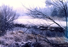 A snowy winter day in the marsh.