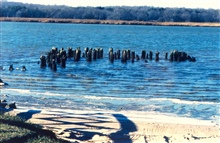 Pier pilings from the old Holland Cliffs Steamboat landing along the PatuxentRiver.
