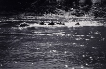 Swimming the horses across the Salmon River.Reconnaissance party of Oscar Risvold