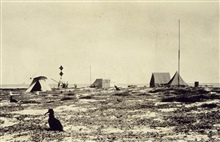 Camp on eastern Lisianski Island.Island was station for World Longitude Campaign.Nesting place for albatross and other marine bird species.Astro party of E. J. Brown