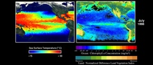 Image #3 of sequence.  In sharp contrast, by July 1998, a dramatic recovery had taken place.  There is a well-developed cold tongue and a dramatic bloom ofphytoplankton along the equator.  High chlorophyll concentrations had notpreviously been observ