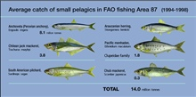 On average, FAO statistical area 87 provides around 45 per cent of the World'scatch of small pelagic species.