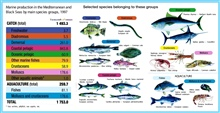 The Mediterranean and Black Seas fall within the same FAO statistical area (Area 37) but, apart from some migratory species, their fisheries and resources aremostly separate.  The total catch from Area 37 showed a generally positive trend until the m