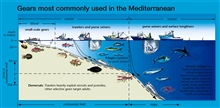 A wide variety of fish and shellfish species support a mostly small-scale fishery, operating near to the coast. Over 40 types of gear are used in the Mediterranean.  Most common type is trawlgear for benthic species; coastal purse seinersfor small pe