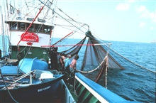 Using a purse seine to catch live bait on the tuna boat Maria Reina de los Cielos from Fuenterrabia, Northern Spain.