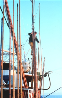 After fishing, any light damage to the poles is repaired.
