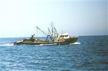 Peruvian purse seiner fishing for small pelagic fish.