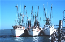 Three shrimp boats at the Municipal Pier