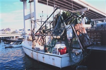 A shrimp trawler at Snug Harbor along the Caloosahatchee River