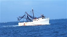A shrimp boat underway