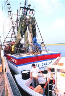 Bringing ice along a shark longliner - a colorful shrimp trawler is tied upforward of the longliner.  Note Turtle Excluder Devices (TED's) in the nets.