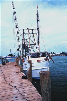 Shrimp boats in the Shrimp Basin