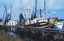 Shrimp boats tied up at Conn Brown Harbor