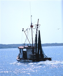 A shrimp boat heads out for the fishing grounds
