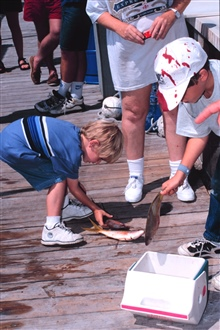 Young fisherman helps pack up part of the day's catch of yellowtail snapper.