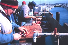 California pier angling - cleaning fish at a fish cleaning station.