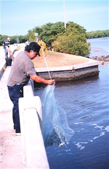 Photo #3a - A fisherman retrieving his net after casting for mullet and otherfish off a bridge south of Everglades City.