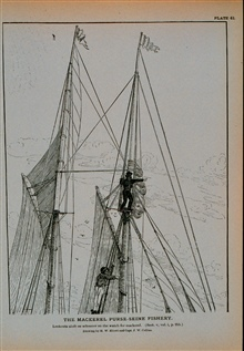 Lookouts aloft on schooner on the watch for mackerelDrawing by H. W. Elliott and Capt. J. W. Collins