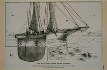 Mackerel schooner with pocket or spiller shipped at seaDrawing by H. W. Elliott and Capt. J. W. Collins