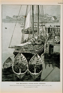 Mackerel schooner just arrived from cruise; crew dressing and salting the fishFrom photograph by T.W. Smillie