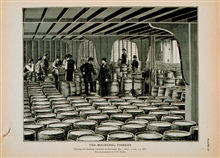 Culling and packing mackerel at Portland, MaineFrom photograph by T.W. Smillie