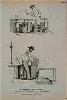 Fig. 1.  The old method of of chopping mackerel baitFig. 2.  The modern mackerel bait millDrawings by H. W. Elliott and Capt. J. W. Collins