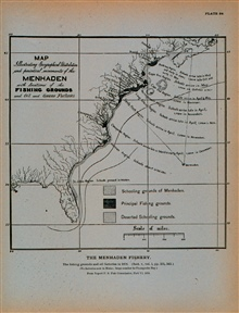 Map illustrating geographical distribution and periodical movements of menhadenAlso locations of fishing grounds and oil and guano factories in the year 1878From Report U. S. Fish Commission, Part VI, 1878