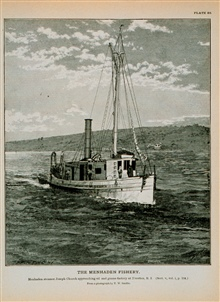 Menhaden steamer Joseph Church Approaching oil and guano factory at Tiverton, R.I.From photograph by T.W. Smillie