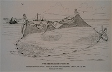 Menhaden crew at work; pursing of the seine nearly completedFrom sketch by H. W. Elliott, 1878