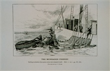 Bailing menhaden from purse-seine into the steamer's holdFrom sketch by J. S. Ryder