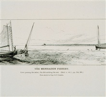 Crew pursing the seine; the fish striking the net.From a sketch by Capt. B.F. Conklin.